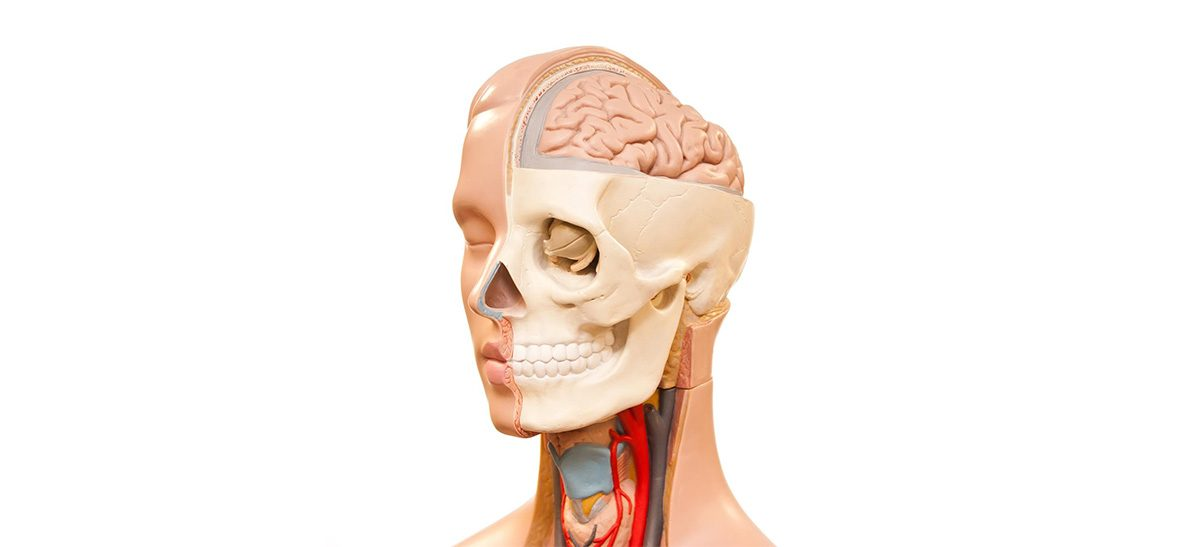 Praktische Anatomie für Implantologen - Human-Präparate-Kurs für ...